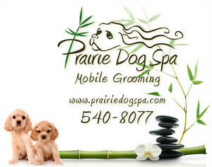 Mobile Dog Grooming Regina Regina Area image 1