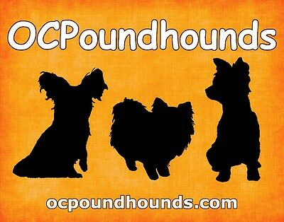 OCPoundHounds Small Breed Rescue