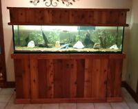 $500 this weekend only 125 gallon aquarium