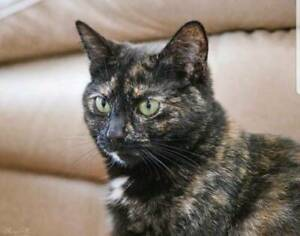 AC1084 : Astrid - CAT for ADOPTION - Vet Work Included