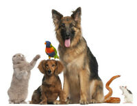 A HAPPY HOME PET SITTING- 24/7 CARE IN A FAMILY HOME