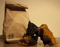 Chaga harvested in Québec - Powerful