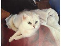 Missing white cat reward London Bridge - £100 reward