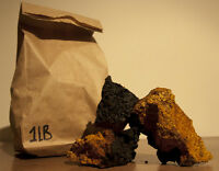 Chaga harvested in Quebec - Powerful