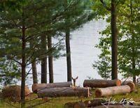 BREEZY on LAKE of BAYS, Muskoka, Huntsville & Algonquin Park