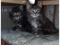Beautiful kitten black boy left only