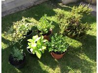 Lovely selection of plants