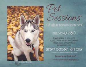 Pet Sessions (supporting the SPCA)