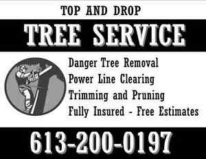 Fully Insured Tree Removal Kingston Kingston Area image 1