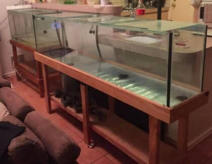 6ft Aquarium with Fish Tank Aquarium Filter Sponge and stand Booragoon Melville Area Preview