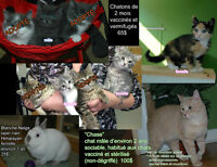 CHATS, CHATONS ET LAPIN