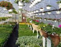 Wanted: experience labor to assemble greenhouses