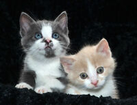 Adorable kittens looking for a home!
