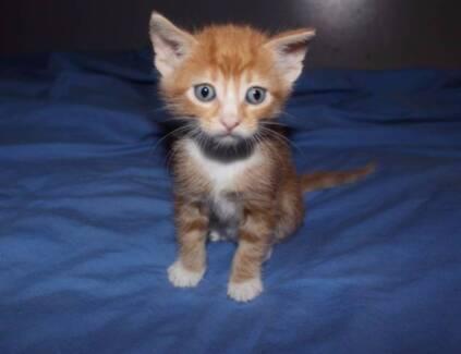 Adorable kitten for sale!