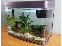 40 Litre Fish Tank Complete Package