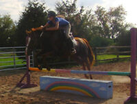 Hunter/jumper mare, quiet, easy ride auto lead changes, bargain!
