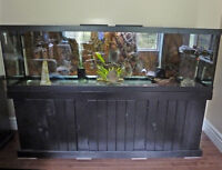125 gal Fish tank with 4 discus. One breeding pair.