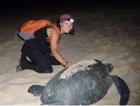 Sea turtle protection program