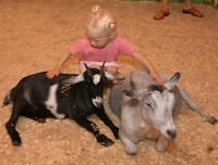 FAMILY FUN at KENJEN FUN FARM