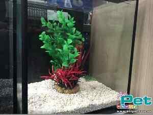Fish tank Aquarium Redhead Lake Macquarie Area Preview