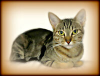"~~ WHISKER  RESCUE  ADOPTION ~~ EXOTIC  "" AVA """
