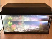 Fish tank and 2 fish