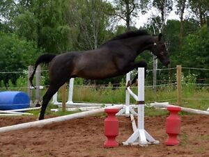 OTTB looking for new home asap!