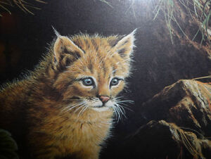 "Marc Barrie ""New World-Lynx Kitten"" Limited Edition, Signed and Stratford Kitchener Area image 8"