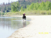 Beautiful Horse Property with Private Riverfrontage