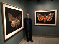 Winged Tapestries: Moths at Large exhibition at the NB Museum