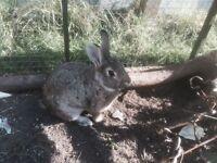 Rabbits and Rabbit hutch