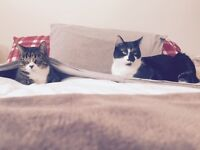 Free 2 fixed, indoor, male cats