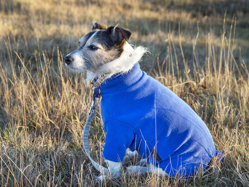 Things to Consider When Sizing a Dog Jumper