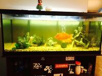 Fish tank and fish for sale!!
