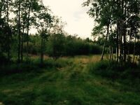 4.3 Acres ( For Your New House :)