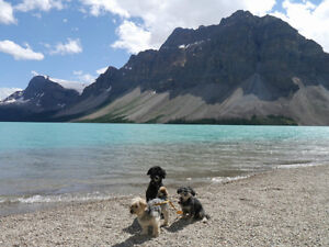 House/Pet sitter Calgary,Jasper, Canmore & Banff +AB