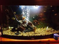 3 ft fish tank