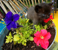 Adorables chatons !