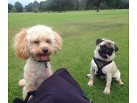 Twickenham dog walker - Additional pet care services