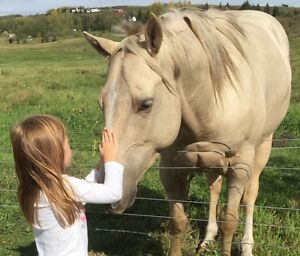 WANTED: casual horse riding for daughter