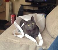 MISSING: Grey cat (female) from Clearview area