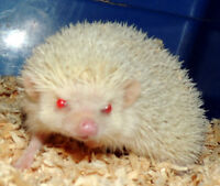 FREE FREE HEDGE_HOGS ....  3 FOR FREE!!!!!