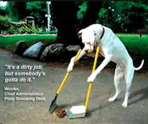 Our Furry Friends Winter Dog Waste Yard Clean-Up Service