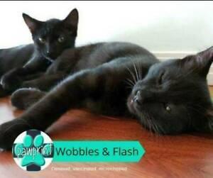 Flash – Cheeky Kitty
