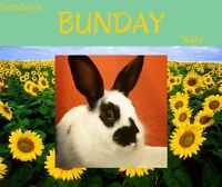 Bunnies (spayed or neutered)