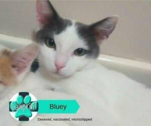 Bluey - Best Friend Forever