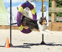 Beginner, puppy obedience and agility classes starting soon
