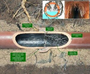 Drain Cleaning / Root Removal / Cured In Place Pipe / CCTV