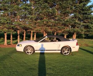 2002 Mustang Convertable