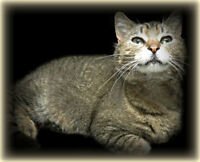 "~~ WHISKER  RESCUE SPECIAL  ADOPTION ~~  "" BUDDIE """